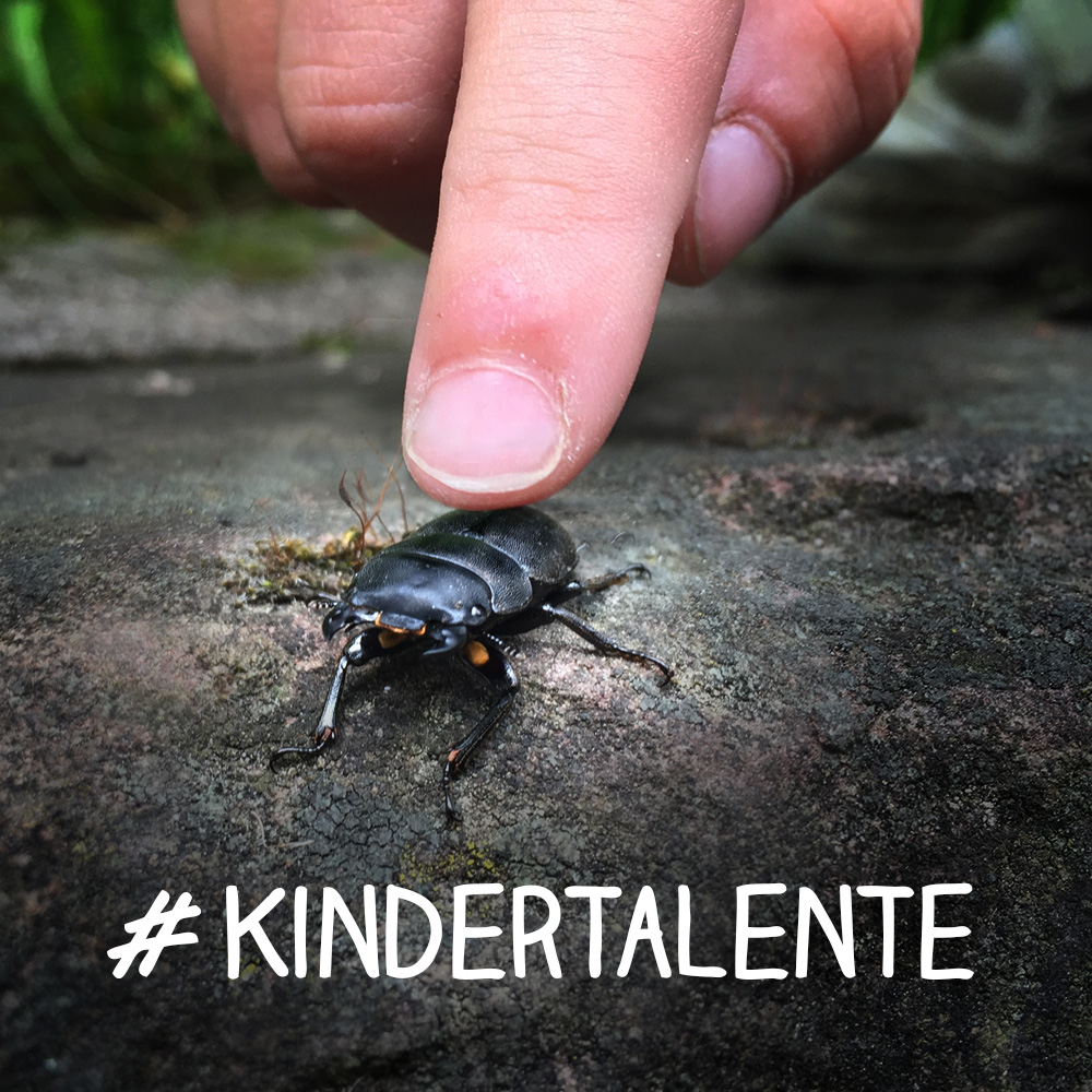 kindertalente finger untersucht und streichelt käfer